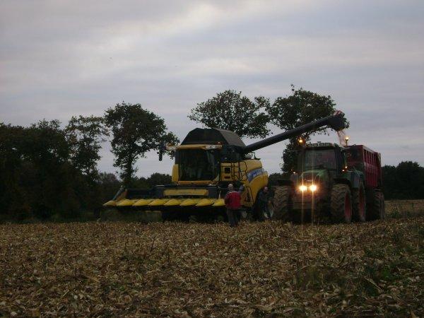 mais  grains 2012 avec 2 moissonneuses new holland CR ET TX 6 et 8 rangs