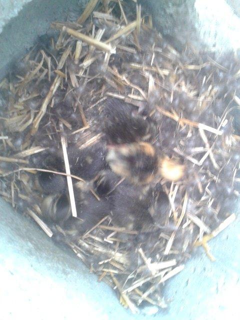 premiere naissance