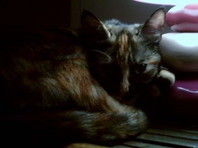 Mon Chaton : Liloo.