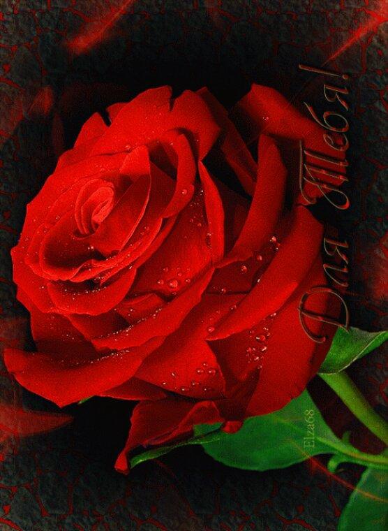 Mon.amie.la.rose