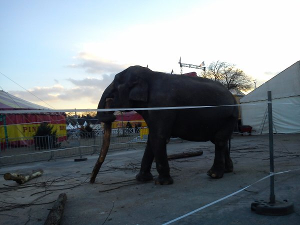 Le cirque pinder à Paris, du 15 novembre 2012 au 13 janvier 2013 (Le zoo)
