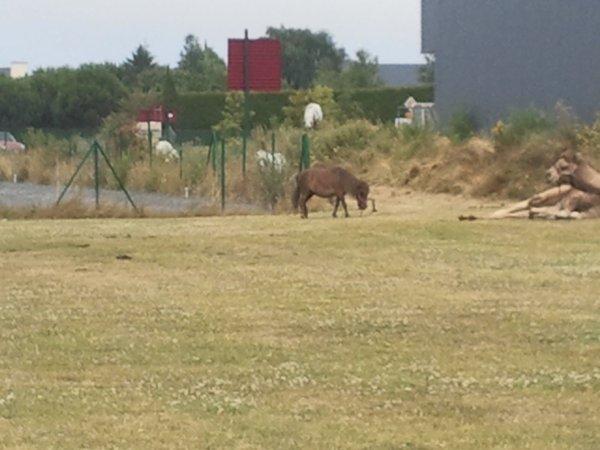 Le cirque Zavatta à Ploubalay (22) du 17 au 20 juillet 2013 (Le Zoo)
