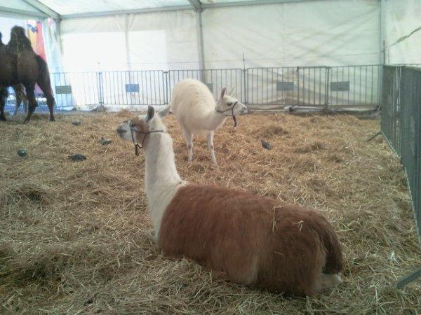 Le cirque pinder à paris, pelouse de Reuilly du 8 novembre 2013 au 12 janvier 2014