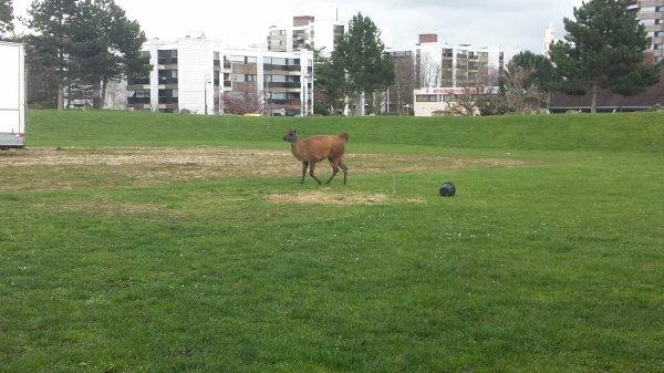 Le cirque Europa à Saint-Leu la forêt (95) du mercredi 23 mars au dimanche 3 avril 2016 (Le zoo)