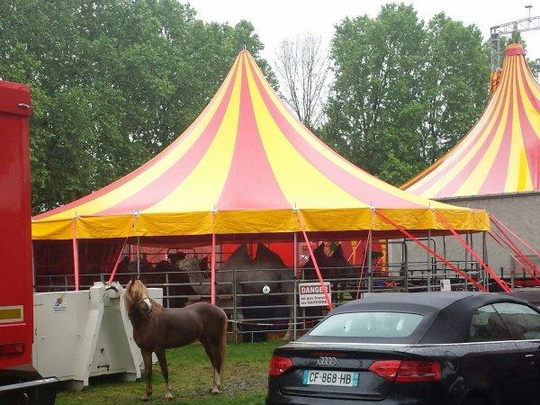 Le cirque Lydia zavatta à Argenteuil (95) du mercredi 11 mai au mercredi 1er juin 2016 (Le zoo)