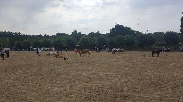 Le cirque Gervais à Saint-Cast Le Guildo (22) du mardi 23 au mercredi 24 août 2016 (Le zoo)