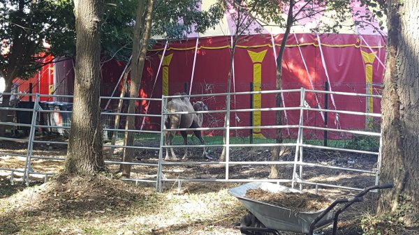 Le cirque Achille Zavatta à Montigny-les-Cormeilles (95) du vendredi 16 Septembre au samedi 1er Octobre 2016 (Le zoo)