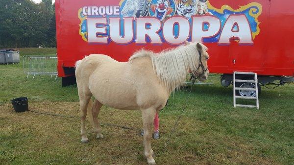 Le cirque Europa à Pontoise (95) du mercredi 5 au dimanche 16 octobre 2016 (Le zoo)
