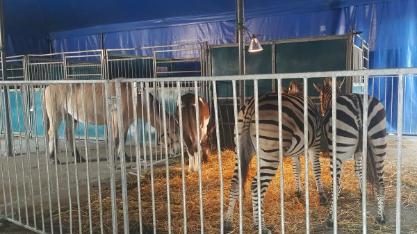 Le cirque Pinder à Paris 12ème (75) du 4 novembre au 22 janvier 2016 (Le zoo)