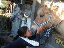 Photo de miss-horse-974