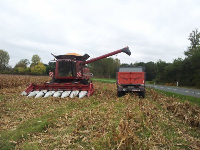 mais grain 2011