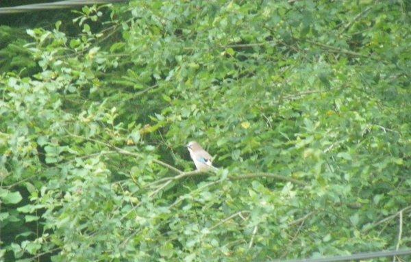 L'oiseau sur la branche !