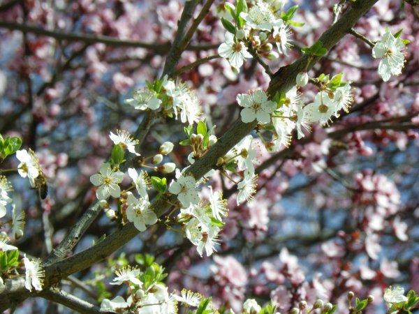 Le printemps est de retour sur les vosges