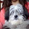 Je vous présente ma chienne...