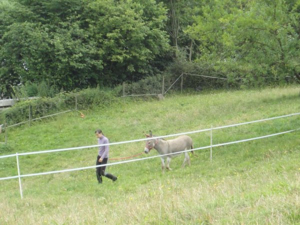 Pom : L'âne de ma grand-mère.