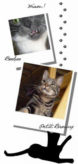 Mes trois Chats