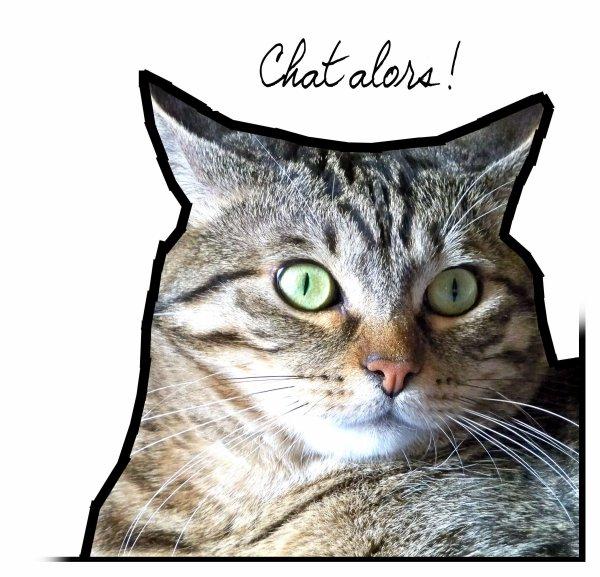 Parce que j'adore les Animaux ! Et surtout Mes chats.