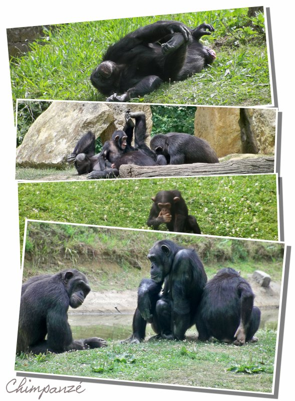 Zoo d'Attilly