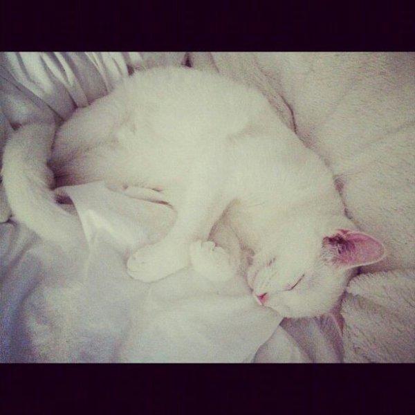 Encore des photos exclusives sur leurs voyage + le petit chat de Bella devenu Grand et Style