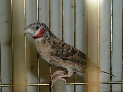 New birds :)