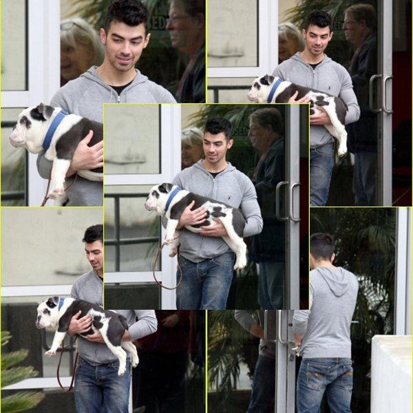 _02.01.2011 : Joe et Winstone chez le vétérinaire