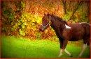 Photo de Aston-poney