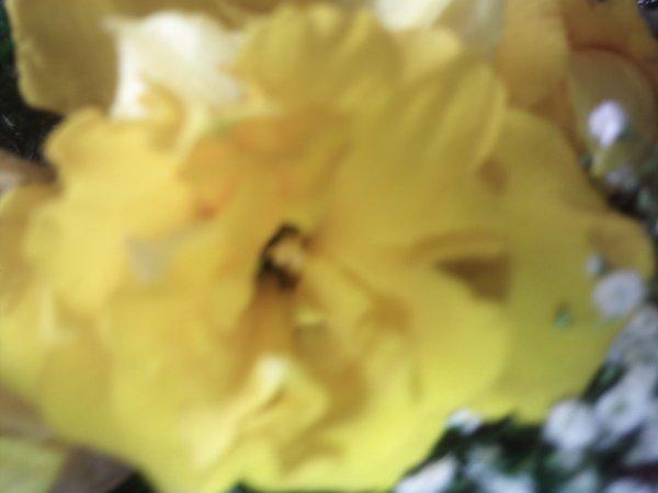 encore un peu de jaune