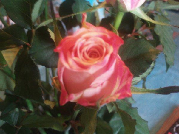 et le rose vous aimez ?