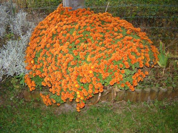 orange ...orange