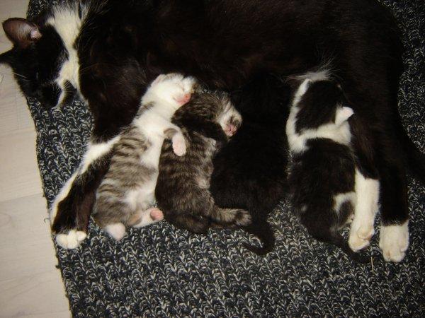 Maman et les bébés