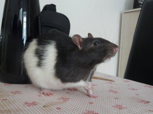 Mon pitit rat ;) <3