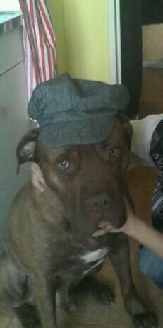 Mdr la casquette est trop petite pour lui !!!