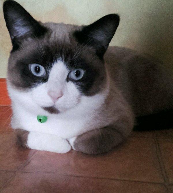 Nero mon chat ❤