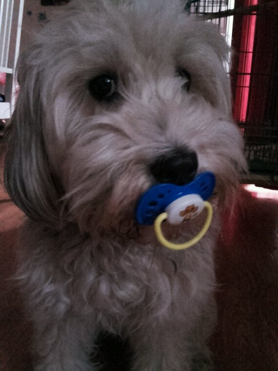 mon chien Lady