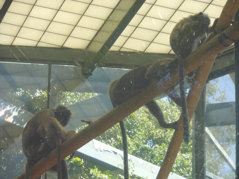 Zoo de San Diego !