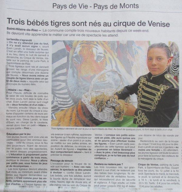 trois bébés tigres sont nés au cirque DE VENISE à st hilaire de riez !!!!!