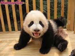 Tu danses bien toi mon petit panda !