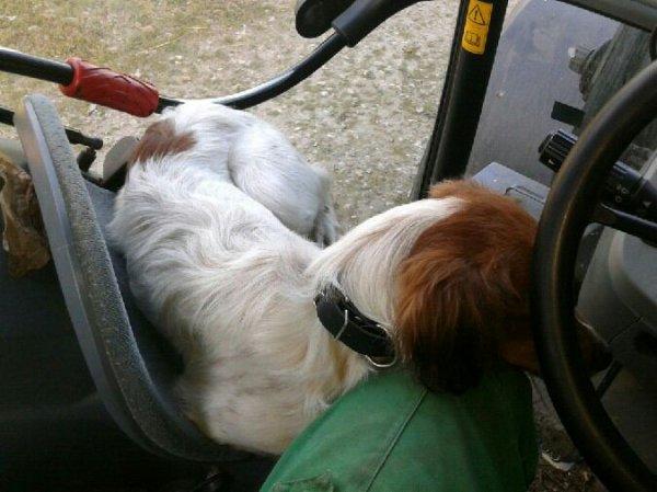 Ghandi dans le tracteur en train de dormir :)