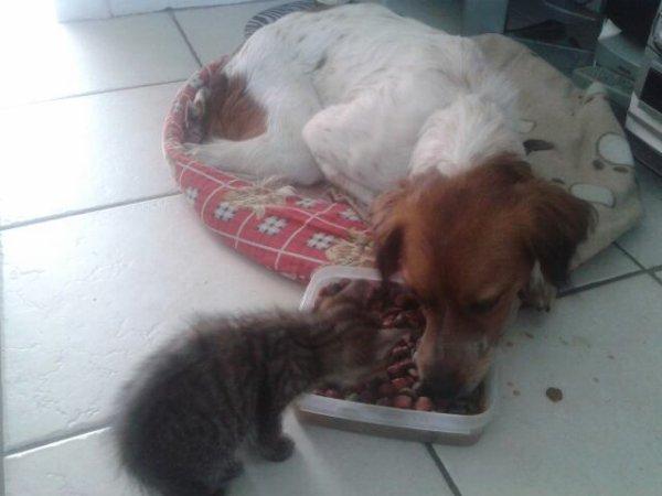 Sweety et Ghandi qui mangent comme des cochons :)