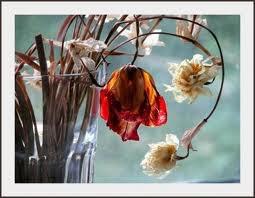 Fleur fané.... coeur brisé....