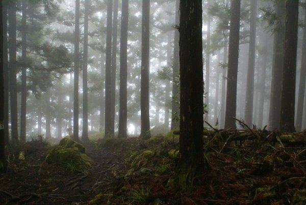Chapitre 10 - Forêt Interdite