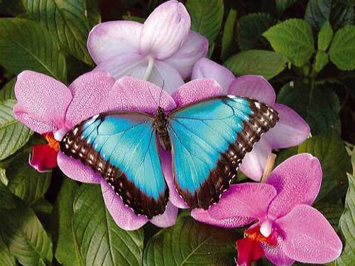 Tel un papillon tu t'es envolee