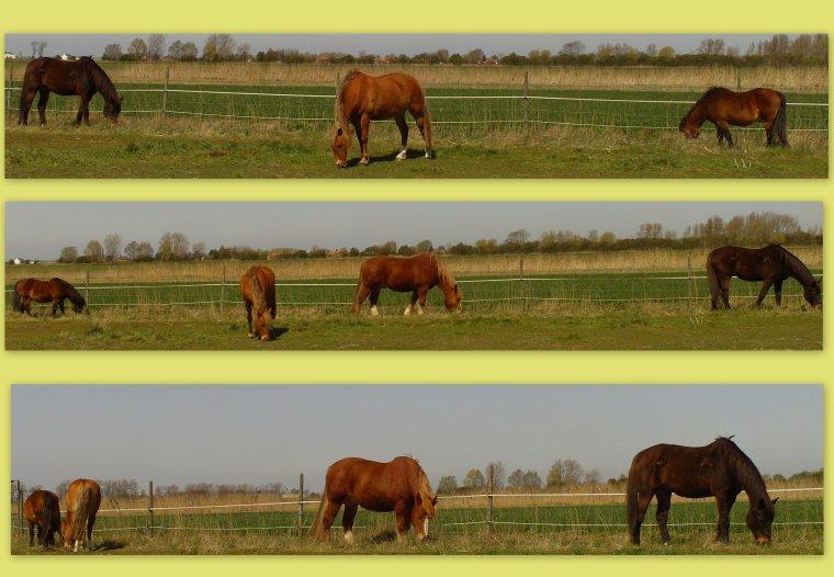 * 19-20 Avril 2010 * Quelques brins d'herbe svp !! *