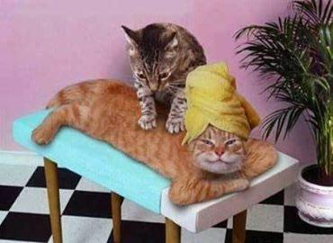 les chats , des amours !....