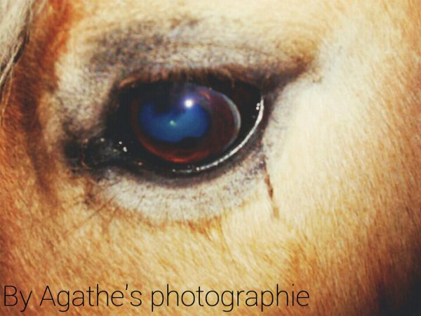 Photographies chevaux.♥
