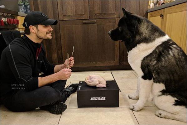 .  Henry Cavill a partagé une photo sur son instagram fêtant Thanksgiving avec ... son chien Kal-El  .