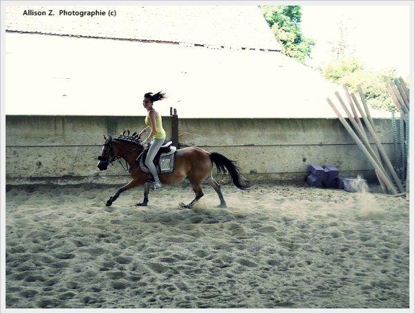 Bienvenue sur Equestrian-Pony ! :)