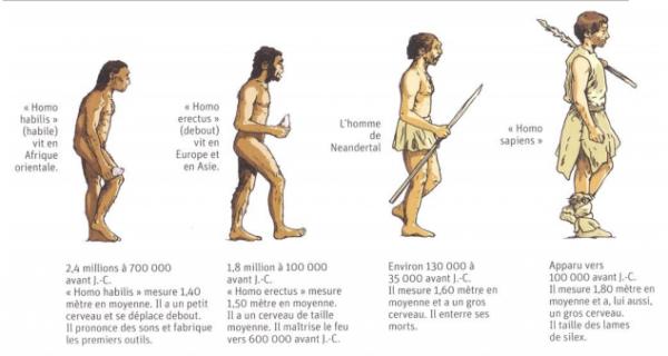 L'origine de l'humanité