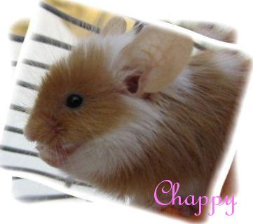 Litle Chappy