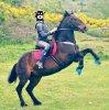 Poney de sport ღ